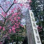 Blüte Japan