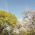 Alaunpark Frühling