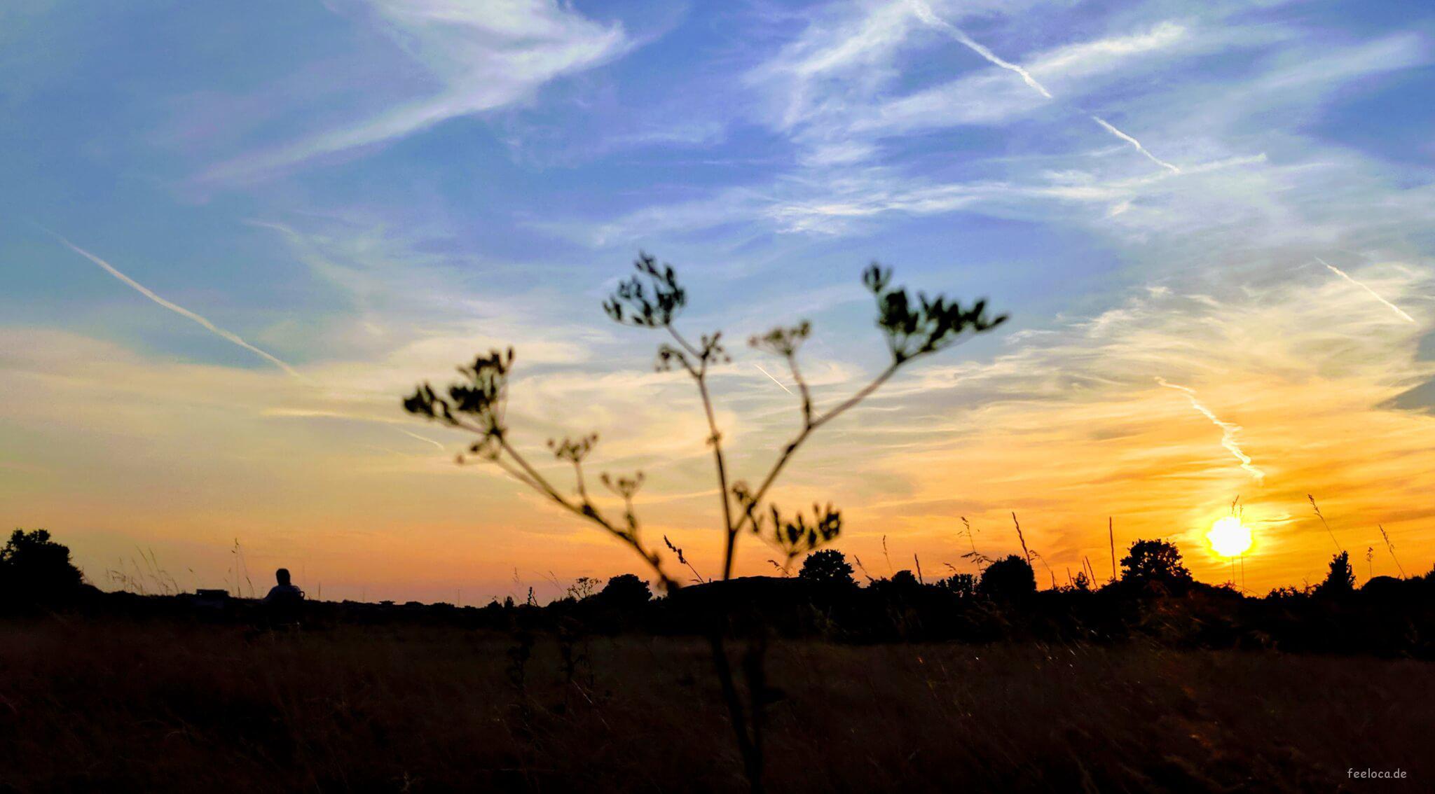 Elbwiesen im Abendrot