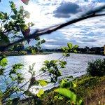 Schwäne auf der Elbe