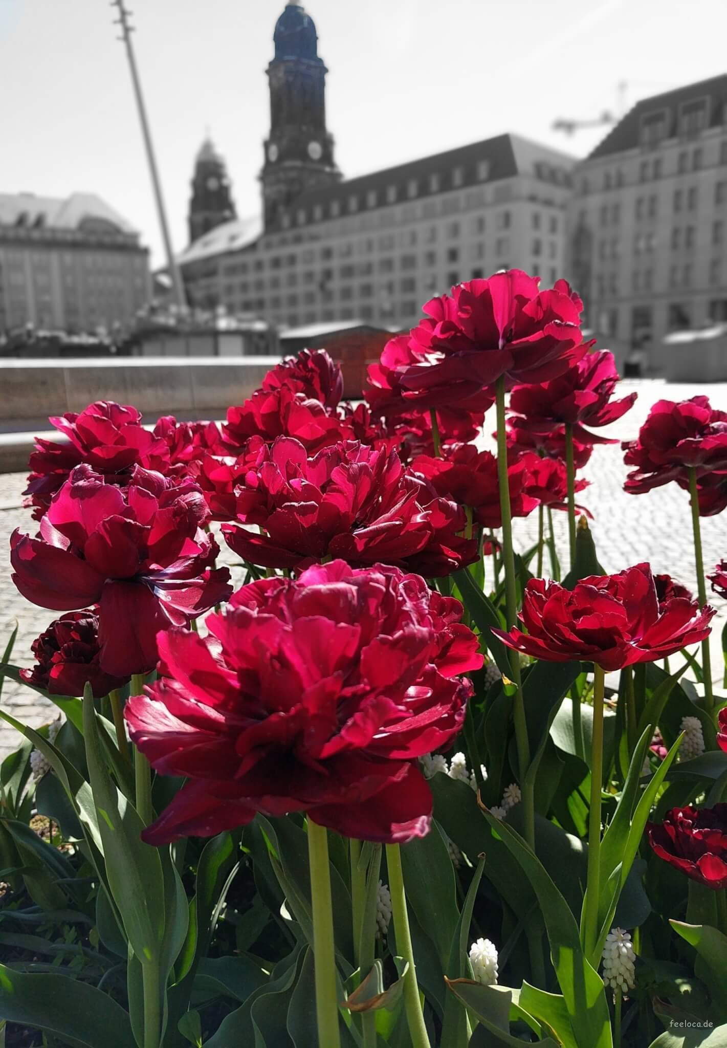 Blumen Altmarkt