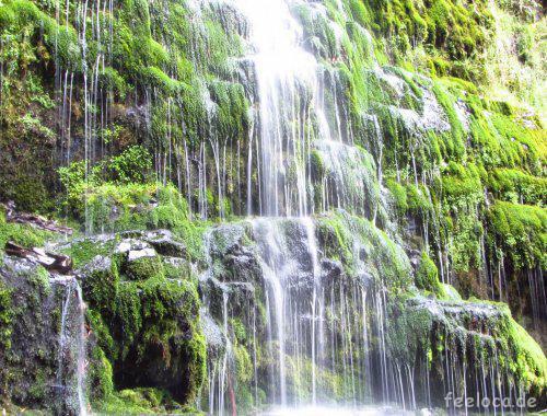 Maits Rest Rainforest Wasserfall