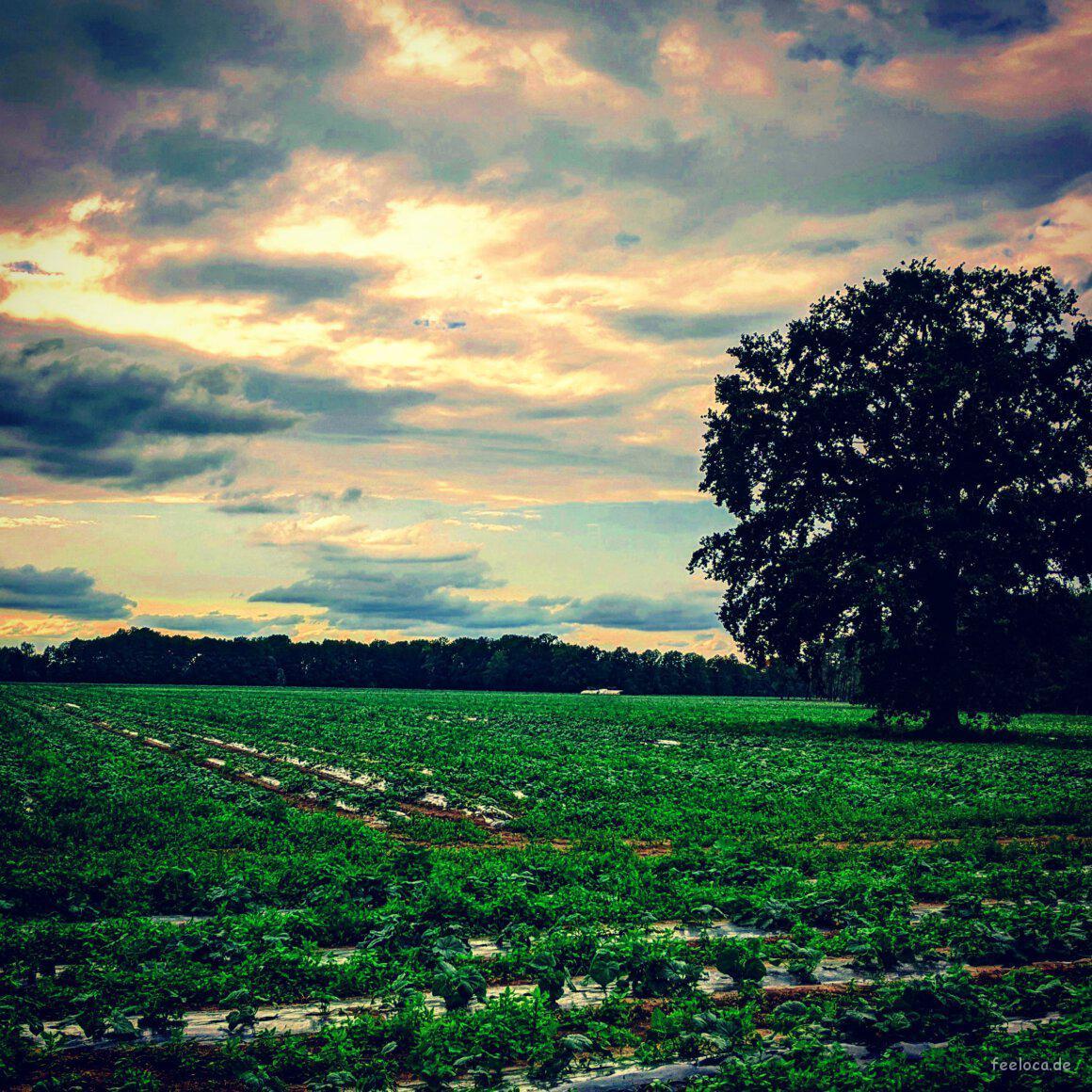 Spreewälder Felder