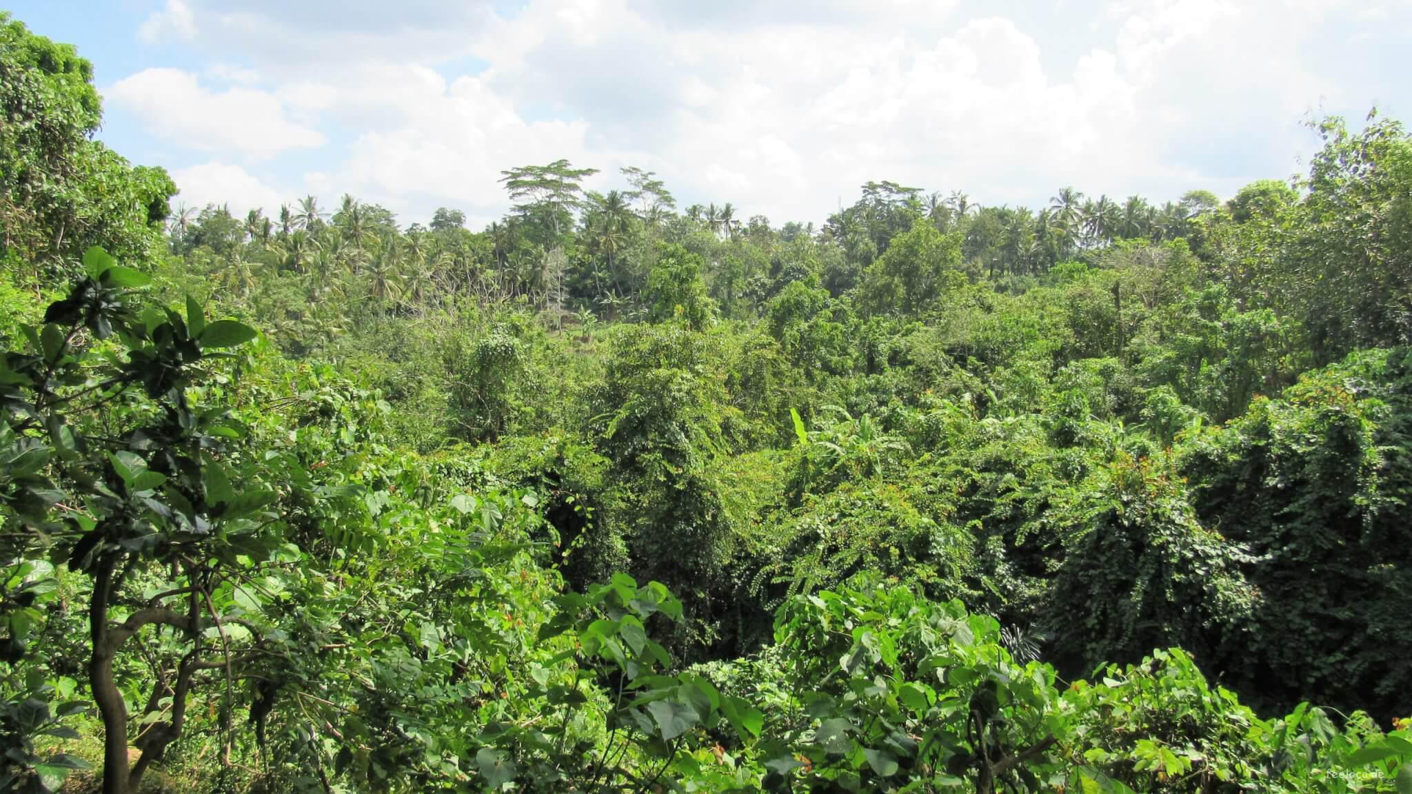Das Grün Balis