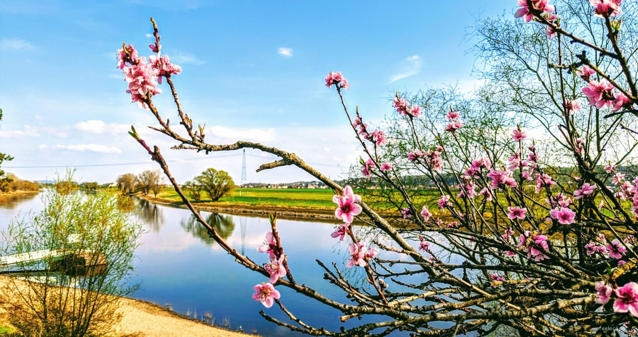 Spring Season - Blossom Season